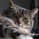 the kitteh awakens