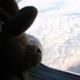 Bunnies on a Plane